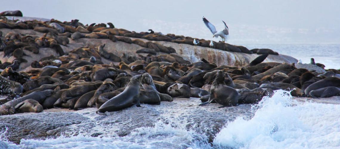 , Seal Island, Ocean View House, Ocean View House