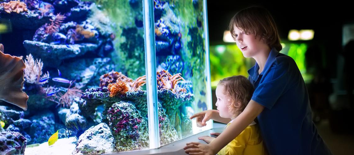, Two Oceans Aquarium, Ocean View House
