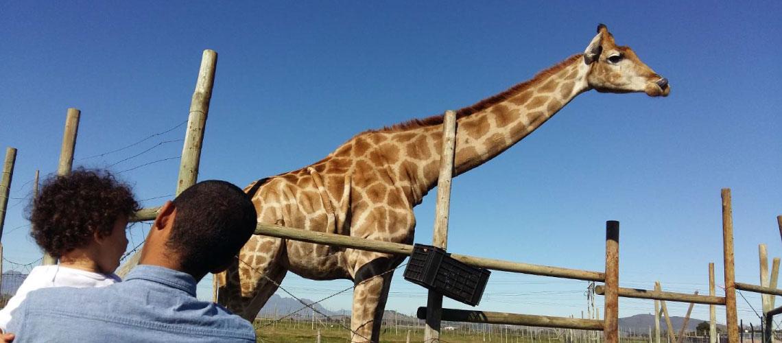 , Giraffe House, Ocean View House